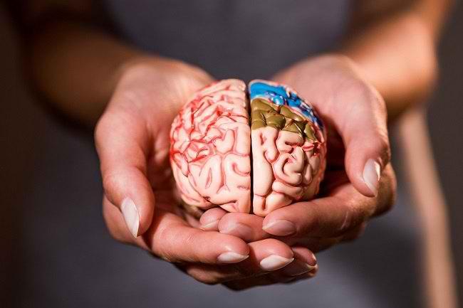 Mengenal Bagian Otak dan Fungsinya Bagi Tubuh - Alodokter
