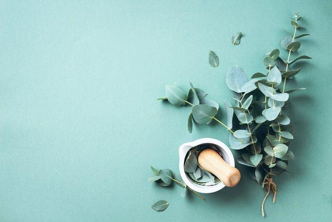Benarkah Eucalyptus Bisa Menyembuhkan COVID-19? - Alodokter