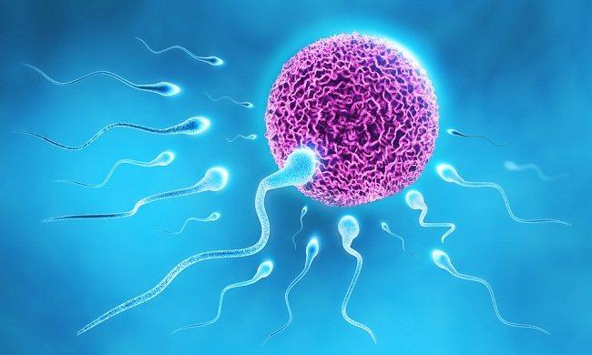 Mengenal Spermatogenesis dan Oogenesis - Alodokter