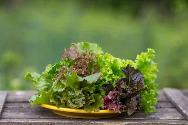 Sederet Manfaat Selada bagi Kesehatan Tubuh - Alodokter