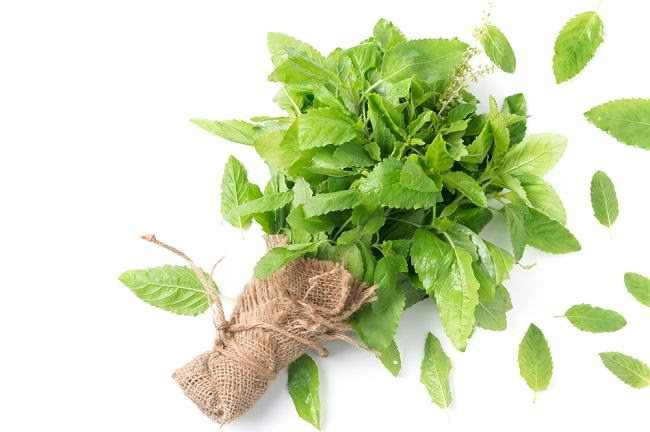 Mengetahui Berbagai Manfaat Basil bagi Kesehatan - Alodokter