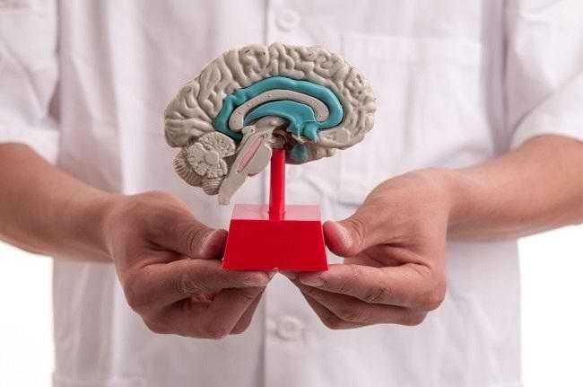 Mengenali Fungsi Otak Tengah Beserta Strukturnya - Alodokter