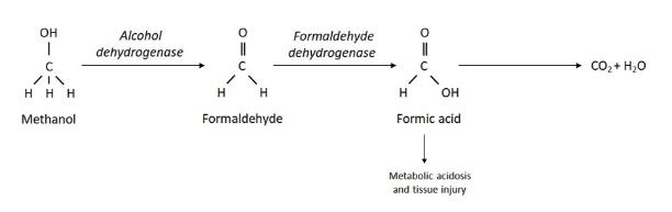 metabolisme methanol