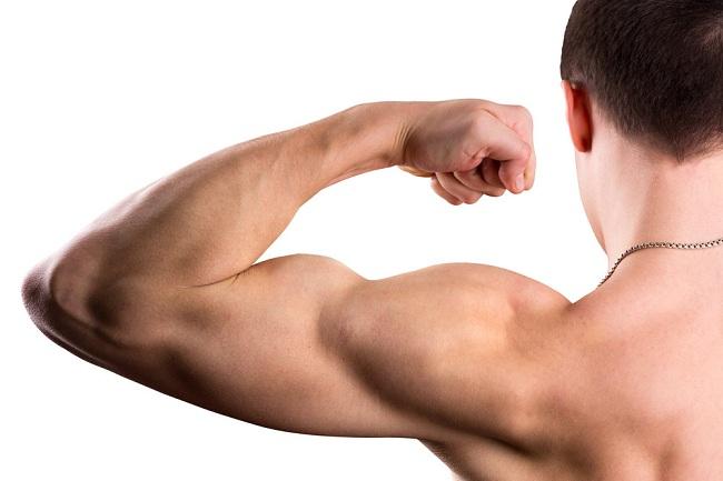 Memahami Sistem Otot dan Fungsinya Bagi Tubuh - Alodokter