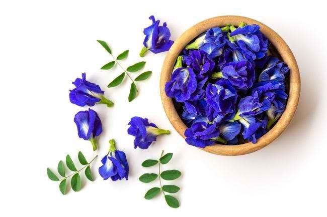 5 Manfaat Bunga Telang sebagai Obat Herbal Alami - Alodokter