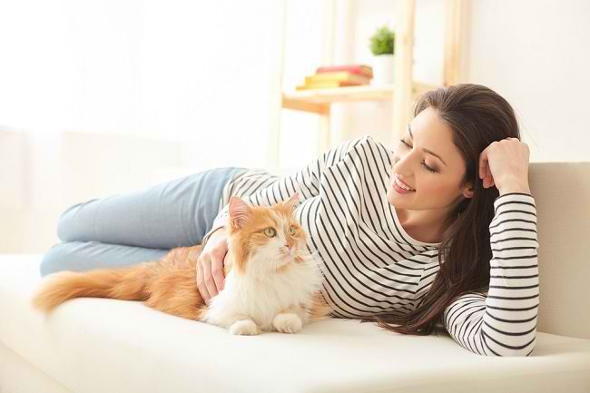 Bahaya Bulu Kucing yang Perlu Diwaspadai - Alodokter