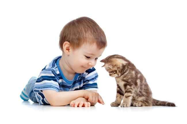 Si Kecil Terkena Cakaran Kucing? Ini Cara Menanganinya - Alodokter