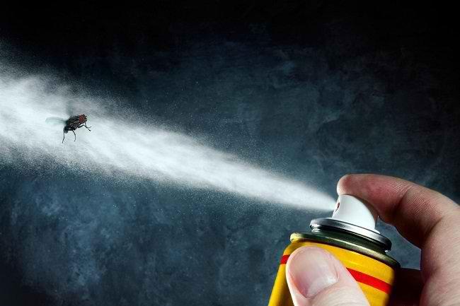 5 Cara Membasmi Serangga Pembawa Penyakit - Alodokter
