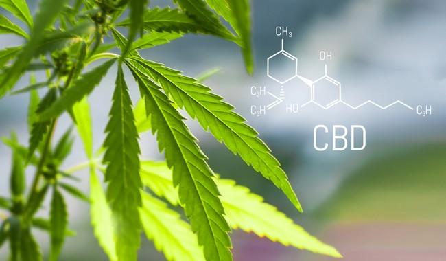 Cannabis,Of,The,Formula,Cbd,Cannabidiol.,Concept,Of,Using,Marijuana