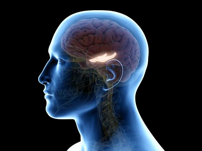 Mengenal Hippocampus, Bagian Otak yang Penting untuk Menyimpan Memori - Alodokter