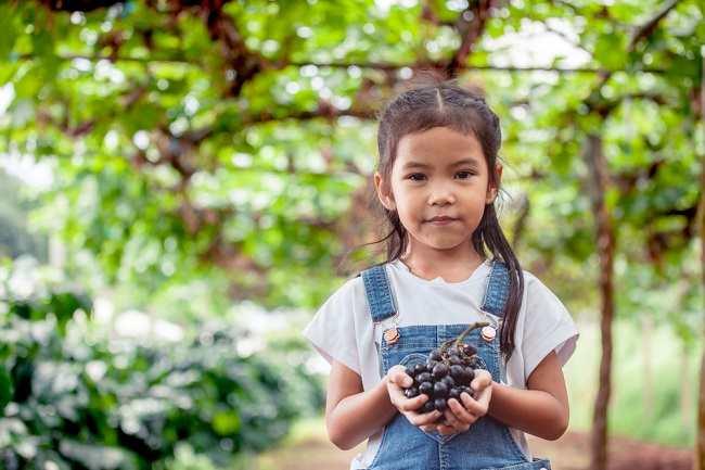 6 Manfaat Buah Anggur untuk Kesehatan Anak - Alodokter