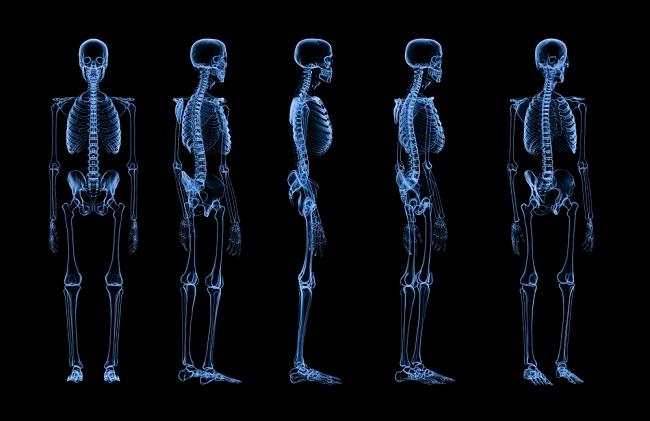 Anatomi Tulang Manusia dari Kepala hingga Kaki - Alodokter