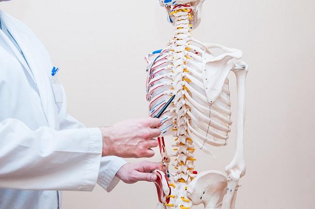 Mengenal Struktur Tulang Belakang dan Fungsinya - Alodokter
