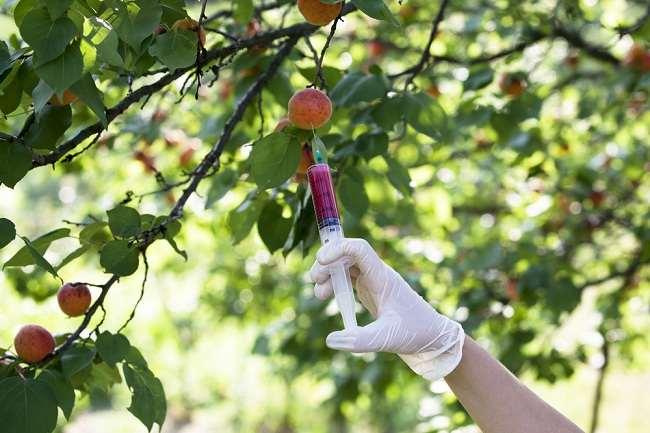 5 Bahaya Pestisida bagi Kesehatan - Alodokter