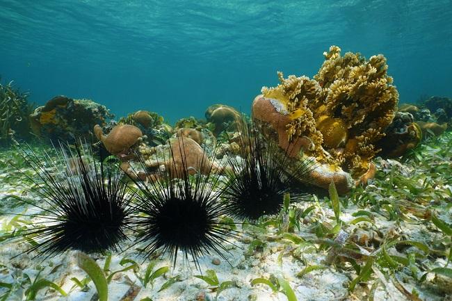 Ketahui Pertolongan Pertama Saat Tertusuk Landak Laut - Alodokter