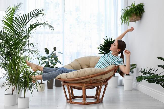 ต้นไม้ฟอกอากาศ พืชพันธุ์เพื่อความสดชื่นและสุขภาพที่ดีขึ้น