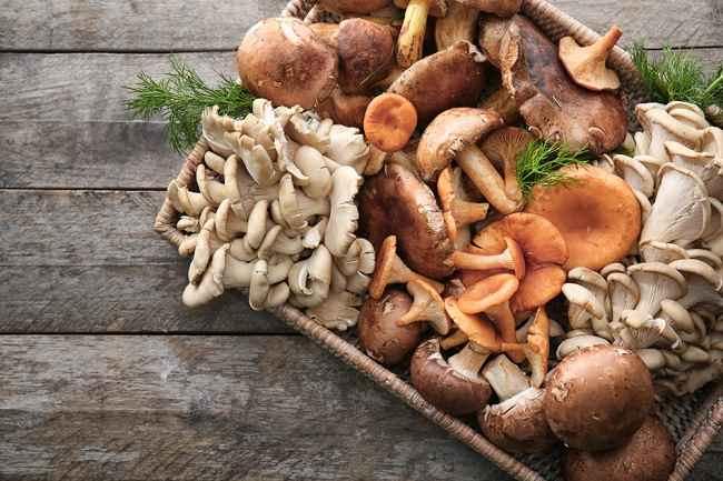 7 Manfaat Jamur bagi Kesehatan Beserta Kandungan Nutrisi di Dalamnya - Alodokter