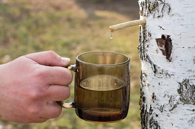 5 Manfaat Getah Pohon Birch untuk Kesehatan - Alodokter