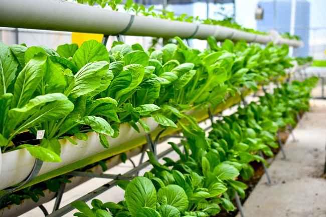 Mengenal Istilah Urban Farming dan Manfaatnya untuk Kesehatan - Alodokter