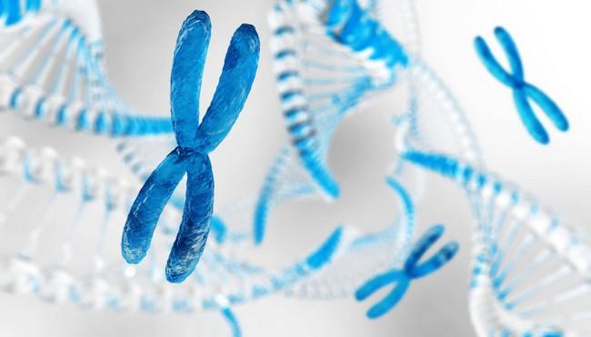 โครโมโซมคืออะไร ส่งผลอย่างไรกับร่างกายมนุษย์