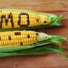 GMO ความจริงที่ควรรู้เกี่ยวกับประโยชน์ และอันตราย