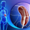 Fungsi Limpa Sangat Penting untuk Sistem Kekebalan Tubuh