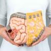 Fungsi Usus Halus dalam Proses Pencernaan Makanan
