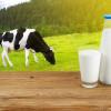 นมวัว ประโยชน์คับแก้ว กับหลากคุณค่าทางโภชนาการ