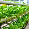 Seputar Urban Farming dan Cara Melakukannya