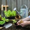 ทำสวน กิจกรรมเสริมสุขภาพสำหรับคนทุกวัย