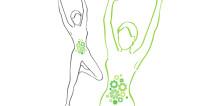 ประโยชน์ของโพรไบโอติกต่อสุขภาพลำไส้และภูมิคุ้มกันร่างกาย