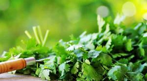 ผักชี สมุนไพรใกล้ตัว กับประโยชน์ต่อสุขภาพ