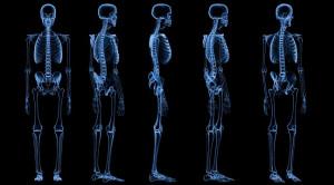 Anatomi Tulang Manusia dari Kepala hingga Kaki