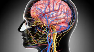 เรื่องน่ารู้ของระบบประสาท กับเคล็ดลับการดูแลรักษา