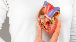 Sistem Kerja dan Fungsi Jantung yang Sehat