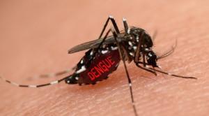 Penatalaksanaan Demam Dengue pada Ibu Hamil