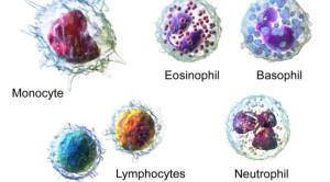 Membedakan Leukositosis Patologis dan Fisiologis pada Kehamilan