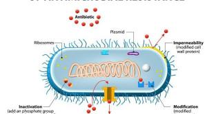 Opsi Terapi Untuk Penatalaksanaan Infeksi Bakteri Gram Negatif Resisten Karbapenem