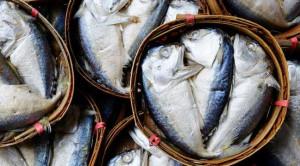 ปลาทู ปลาตัวเล็กกับประโยชน์คับเข่ง