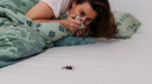 โรคกลัวแมงมุม (Arachnophobia) ทำความเข้าใจสาเหตุและวิธีรักษา
