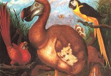 The extinction of the Dodo Bird