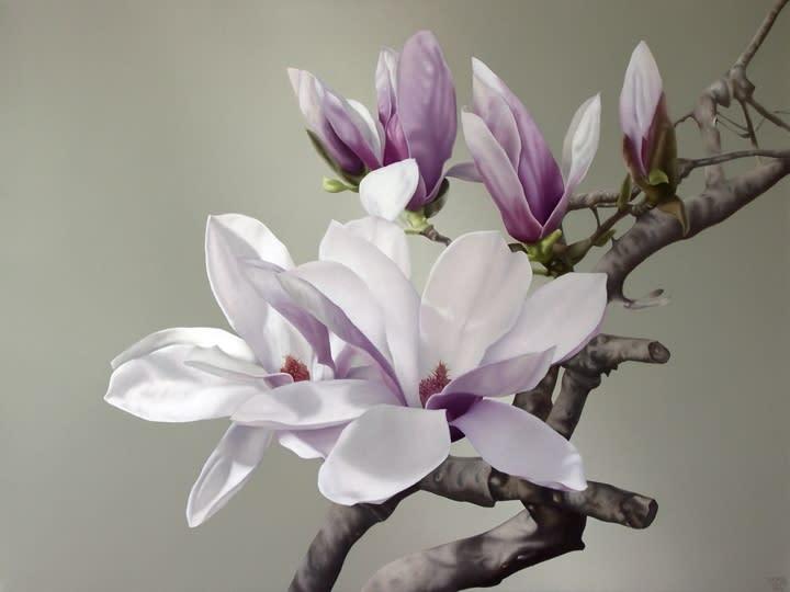 free_magnolia