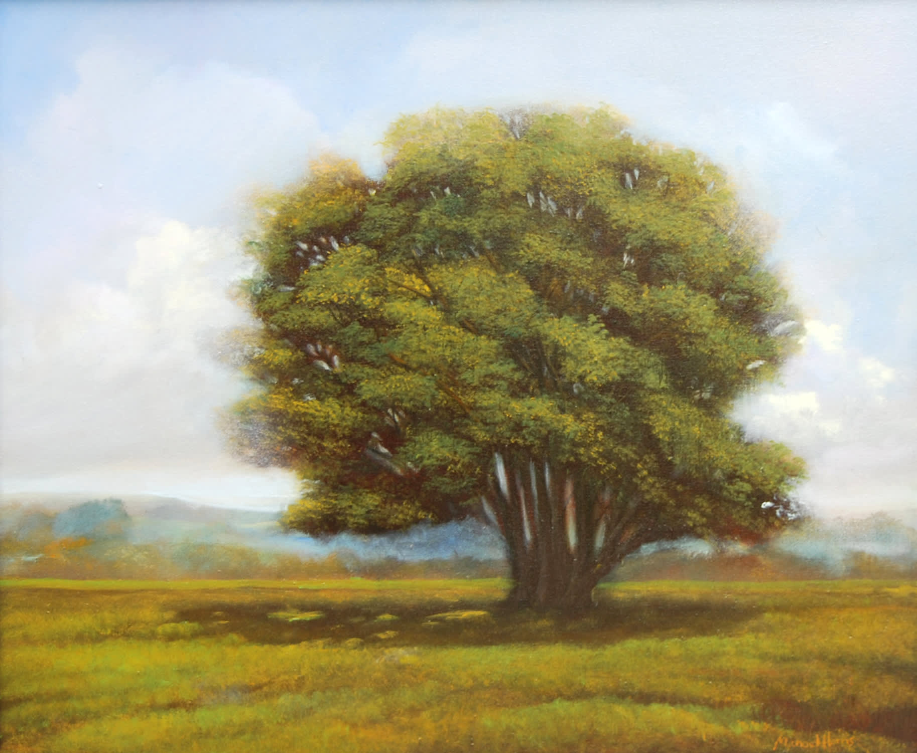 'Summer Light' by Michael Harris at Gallery 133