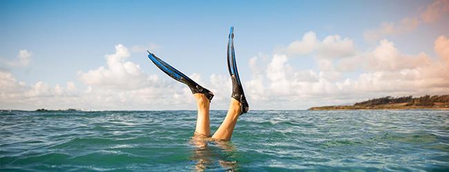 Flippers in Ocean