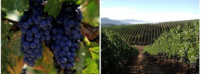 PlumpJack's Latest Vineyard Venture