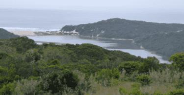 Ocean & Lagoon Olivewood Estate