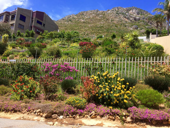 A vacant plot are for sale through Seeff Gordon's Bay