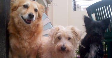 Pet-friendly accommodation