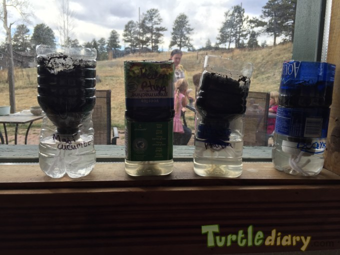 Reusing water bottles to plant seeds - Earth Day Contest April 2015 Submission