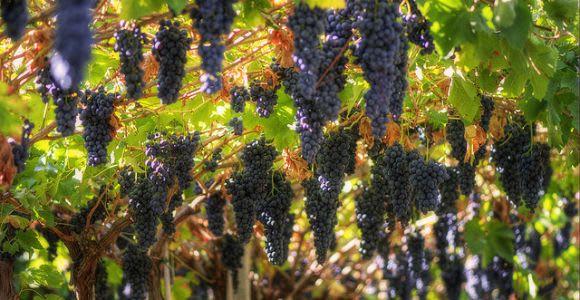 Amarone Wine Tour & Tasting from Venice, Padua or Verona